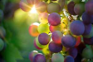 Wine Compliance and Licensing Services Napa Valley
